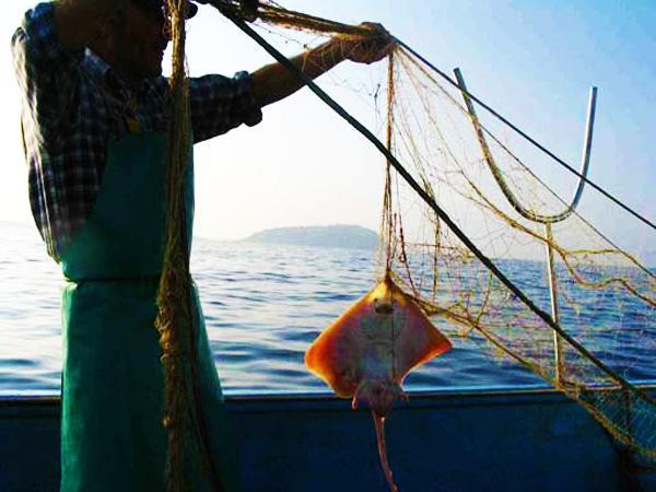 Pescaturismo: fonte di reddito e di turismo