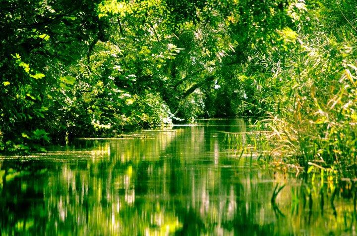 Riserva Naturale Regionale Orientata Fiume Ciane e Saline di Siracusa